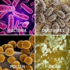 air-duct-pollen